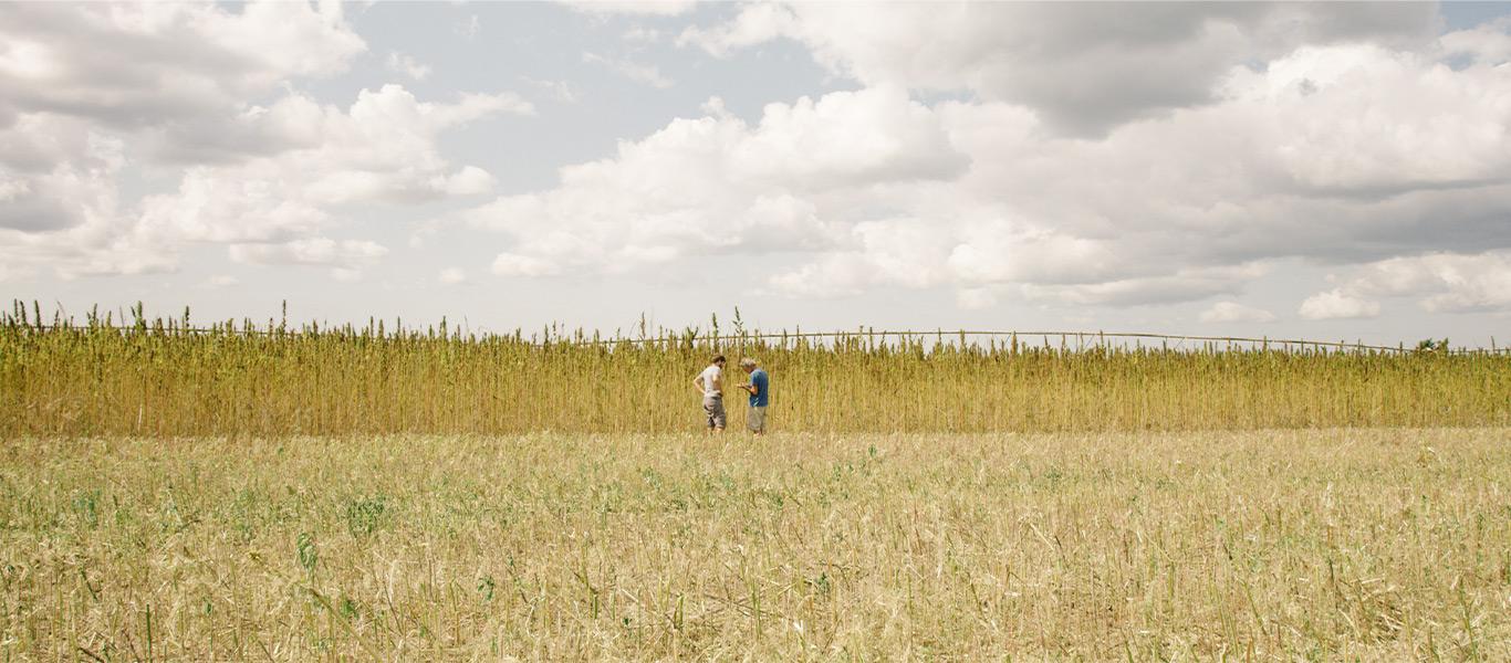 nuntisunya-pure-nature-collection-100%-chanvre-textile-problematique-fibre